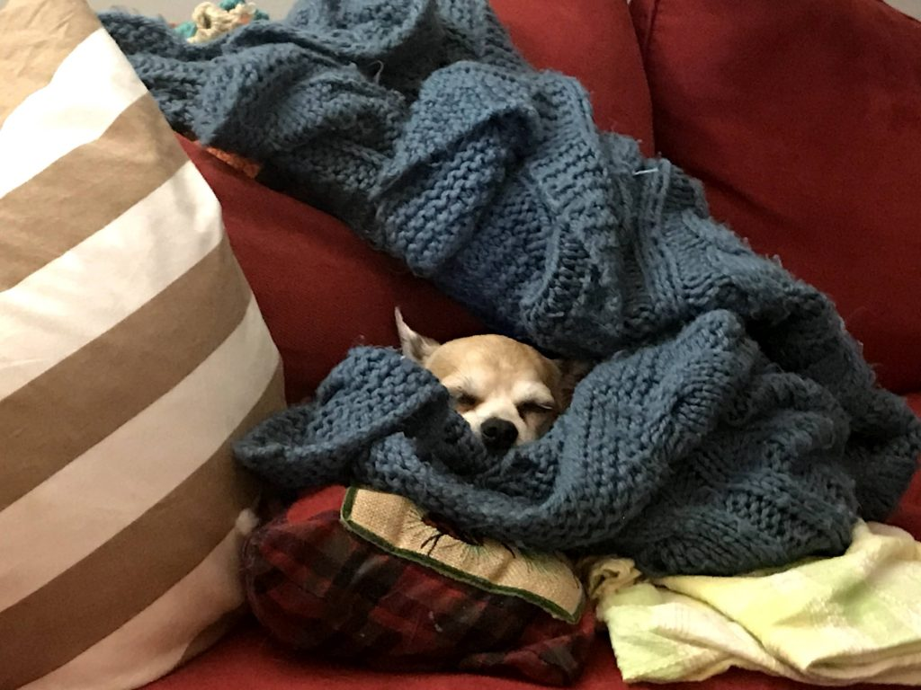 a little tan dog snuggled-in beneath pillows and a blanket
