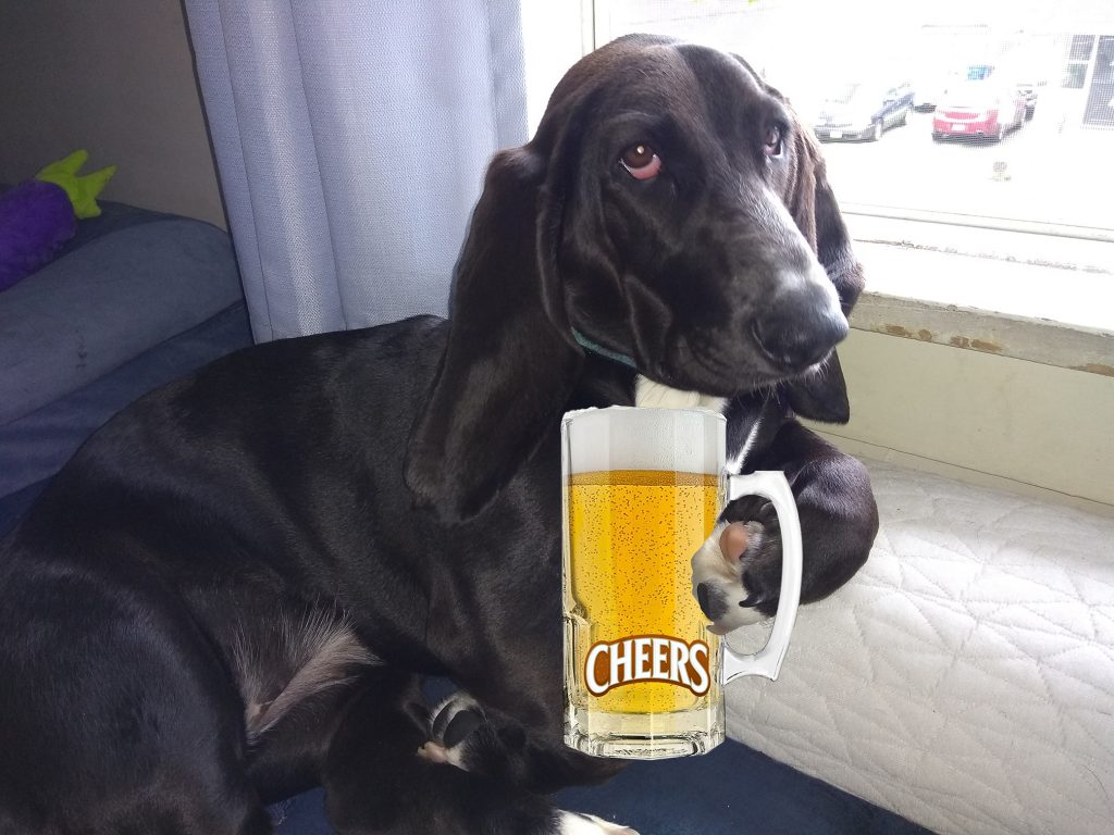 """black basset hound appearing to be holding a glass mug of beer that has the """"Cheers"""" logo (from the television show) on it."""